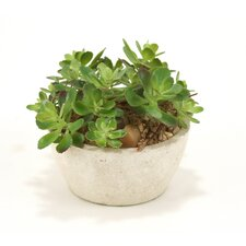 Silk Assorted Succulent Garden with Sand in Stone Planter