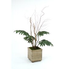 Silk Lacy Philodendron Leaves, Badam Nuts and Twigs in Square Wood Planter