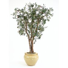 "96"" Olive Tree in Glazed Sculpted Stoneware Pot"