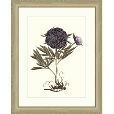 Buchoz Flowers in Purple II Wall Art