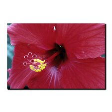 'Into The Hibiscus' Canvas Art