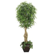 Realistic Willow Ficus Tree in Decorative Planter