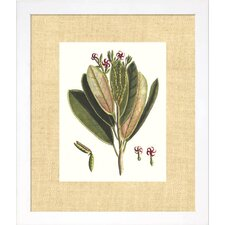 Floral Living Buchoz Leaves I Framed Wall Art