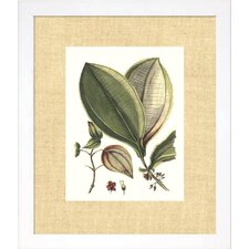Floral Living Buchoz Leaves V Framed Wall Art