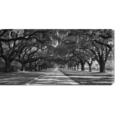 'Live Oaks Along Road' by William Manning Stretched Canvas Art