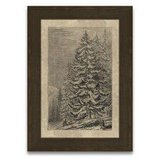 Timeless Timber Spruce Fir Wall Art