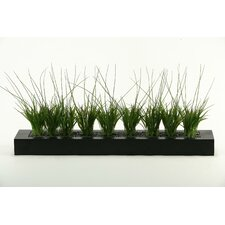 Onion Grass in Tray