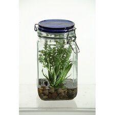 Sedum Succulent and Mini Aloe in Glass Jar