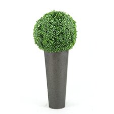 Boxwood Ball Topiary in Round Planter