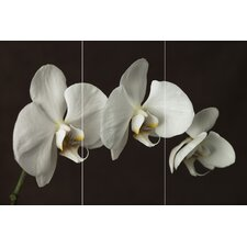 Orchid Canvas (Set of 3)