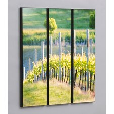 "Three Piece Rows of Vineyard Grapes Laminated Framed Wall Art Set - 36"" x 35"""