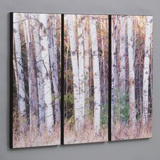 "Three Piece Birch Trees in the Fall Laminated Framed Wall Art Set - 36"" x 50"""