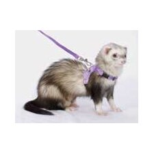 Ferret Walking Jacket